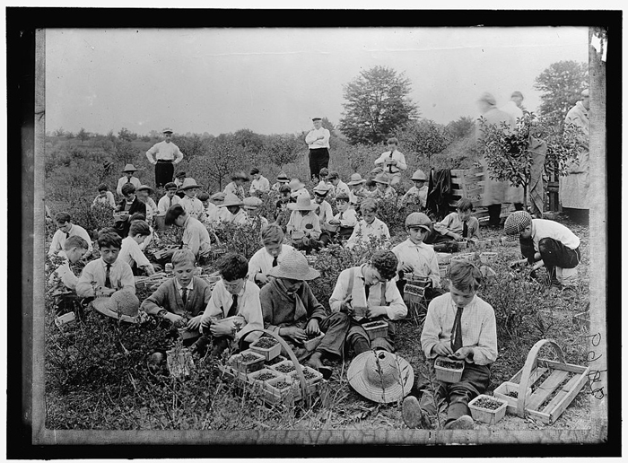 Boys pick and sort through berries, 1917.