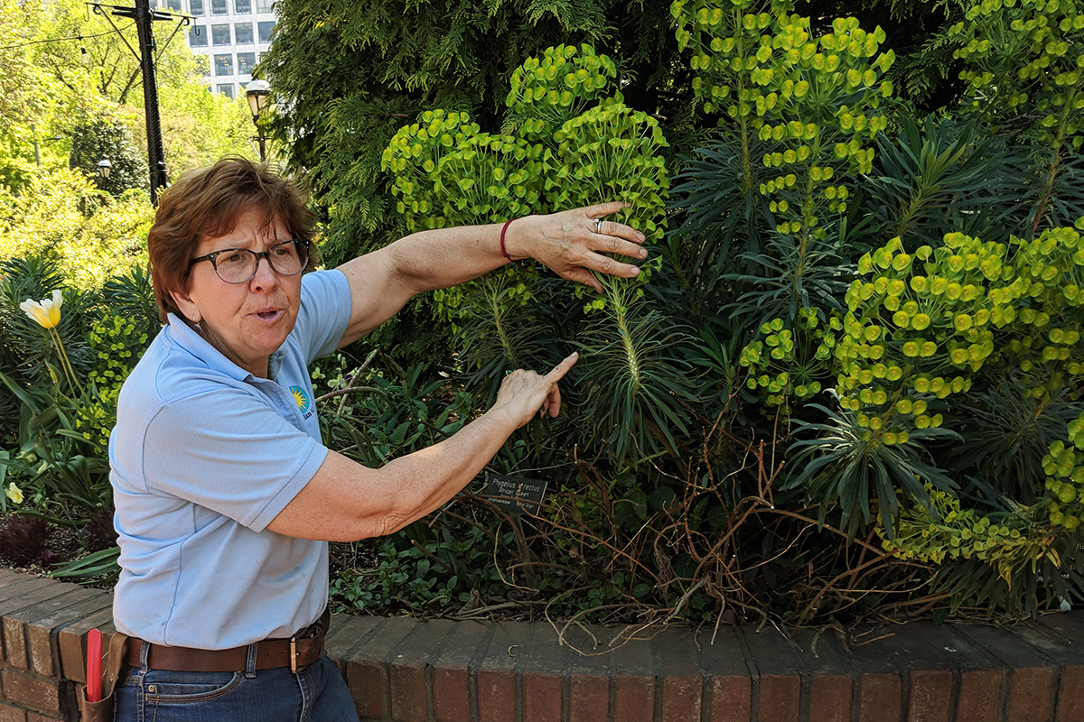 Janet Draper is Smithsonian Garden's lead horticulturalist for the Mary Livingston Ripley Garden in Washington, D.C. Photo by Betty Belanus