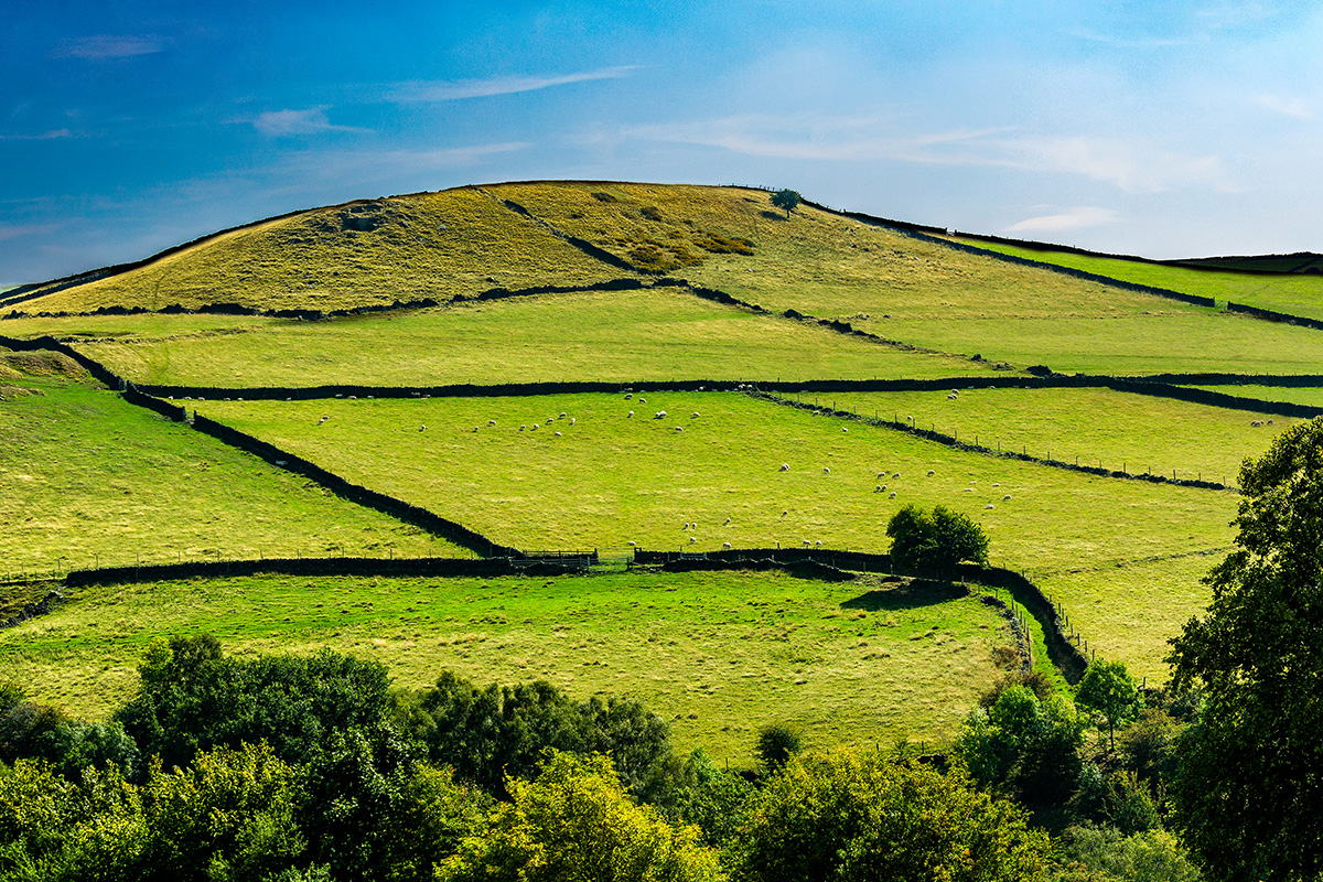 Dry-stone walls line the hills and sheep pastures in Derbyshire, England. Photo by Roland Keates
