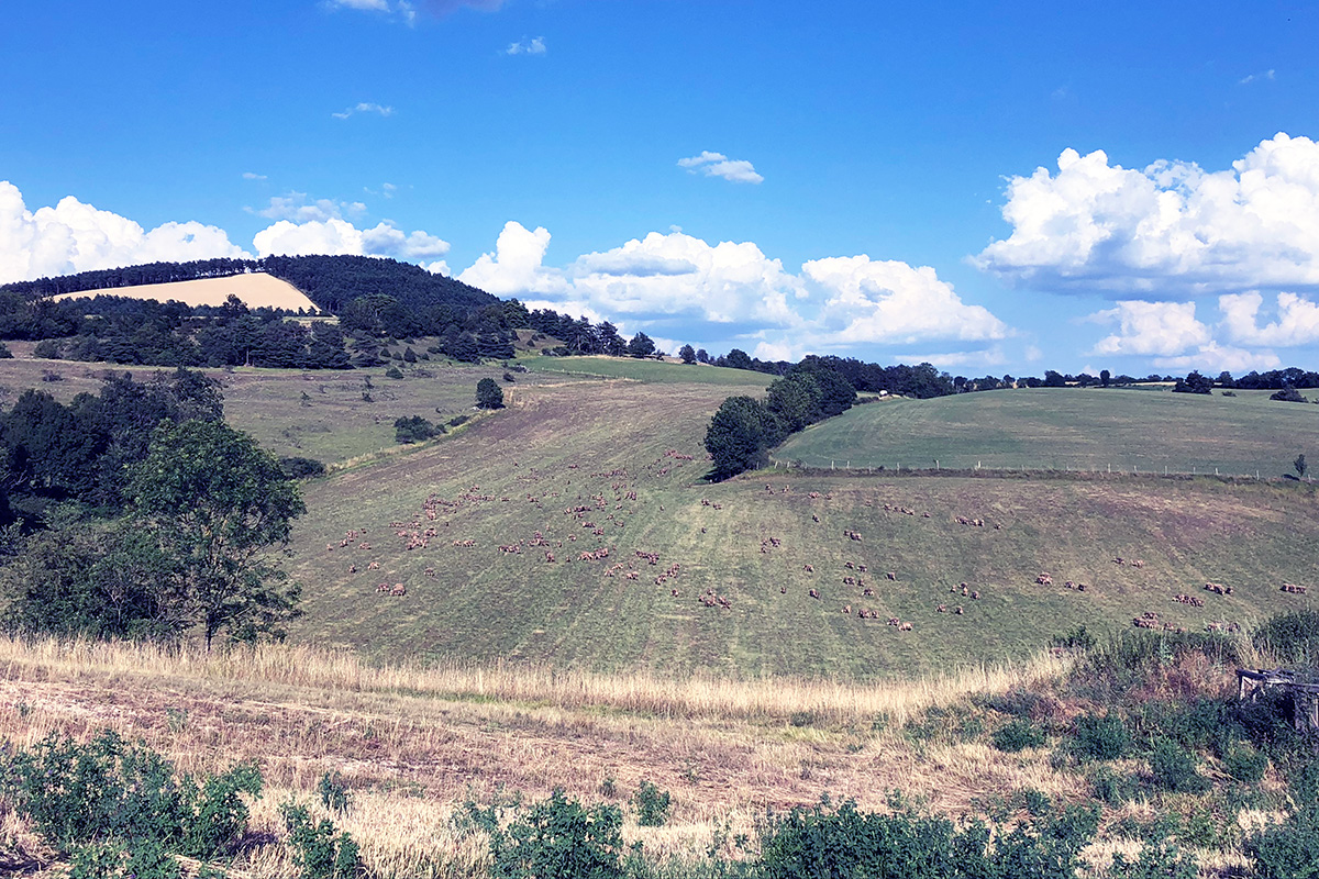 Rolling hills and grazing sheep: the view from the barn at the Ferme Seguin. Photo by Sara Brennan