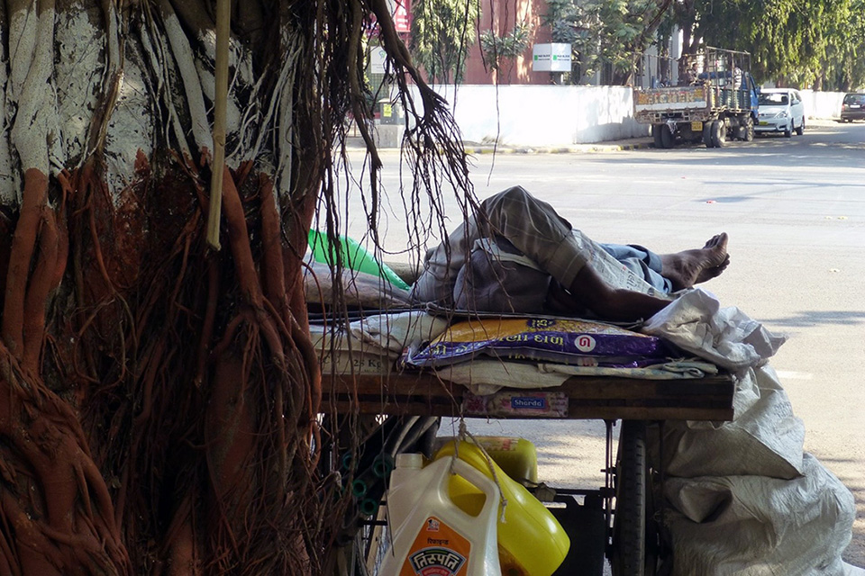 A paper recycler naps under a banyan tree.