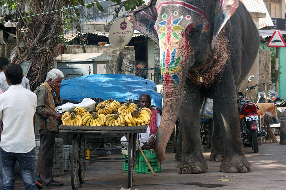 A banana vendor and an elephant keeper team up to generate business.