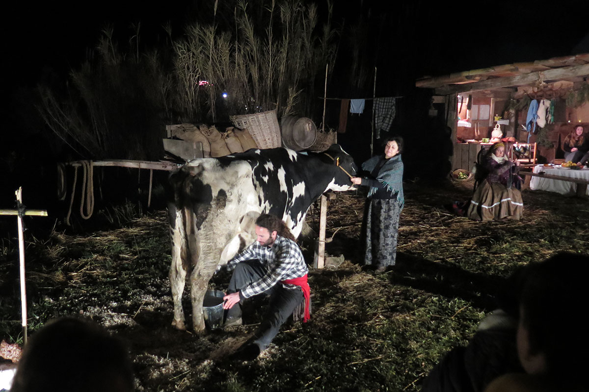At night, a man milks a cow while a woman holds its reins.