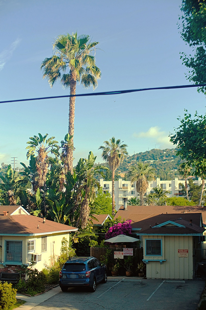 Photo from a second-story porch showing a small apartment parking lot in the foreground, looming palm trees, and a large apartment building and hill in the background.