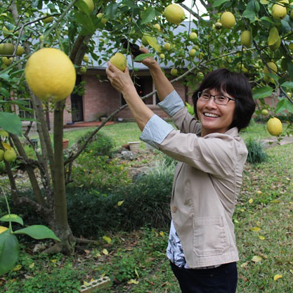 An older woman smiles as she picks lemons from a tree.