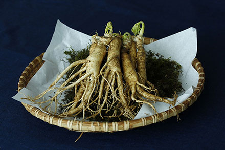 Ginseng roots on a woven basket platter on a black backdrop.