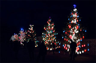 In the dark, several trees lined up are illuminated by colorful lanterns hanging on their branches, silhouetting some people in the foreground.