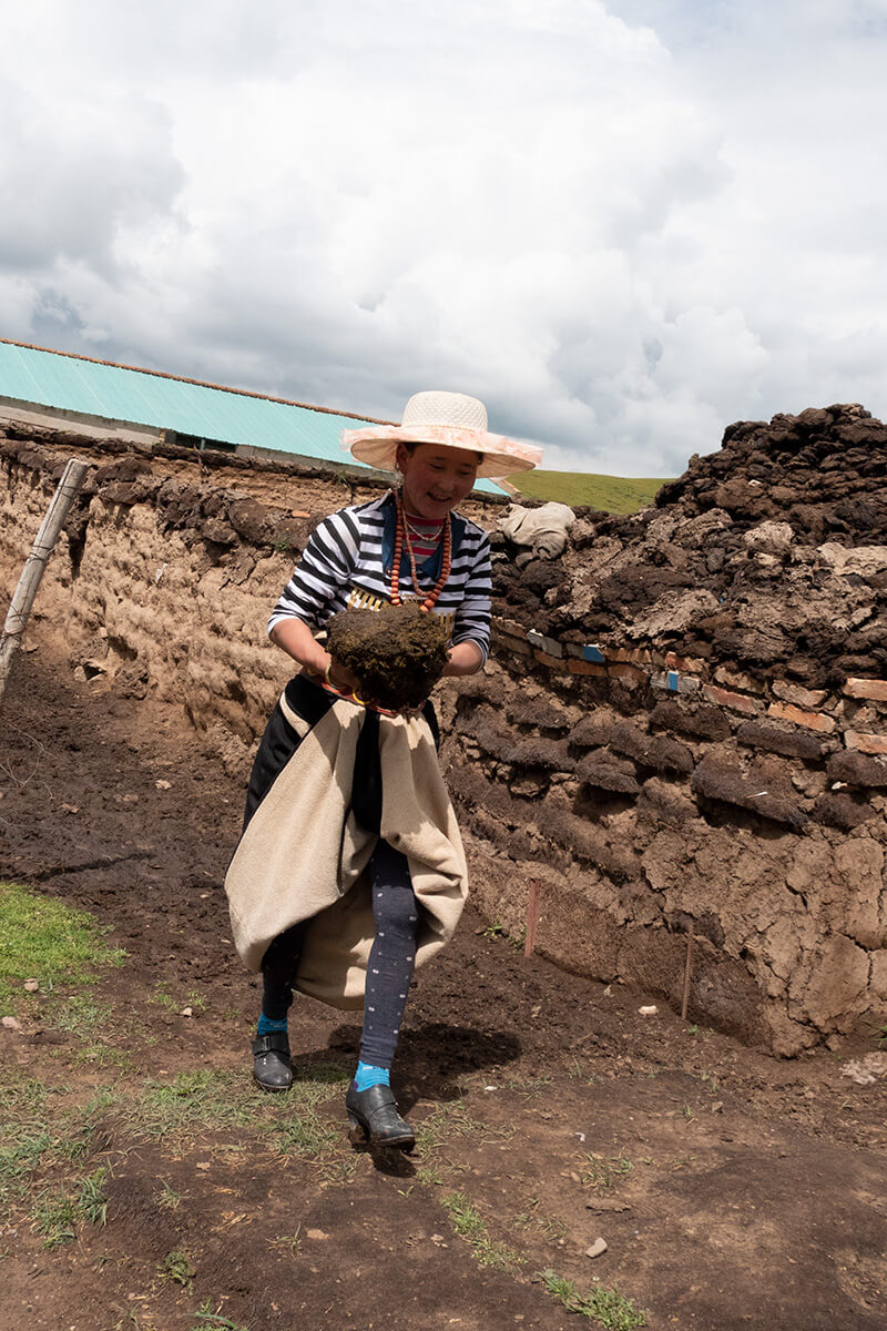 Collecting yak dung in Sonak Village, Qinghai Province.