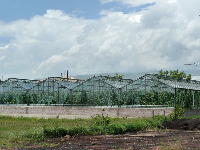 Large greenhouses now allow farmers in Voskevaz to grow strawberries out of season, and the reputation of their fruit has grown so highly that vendors in Yerevan may falsely claim the fruit's origin. Photo by Diana N'Diaye, Smithsonian