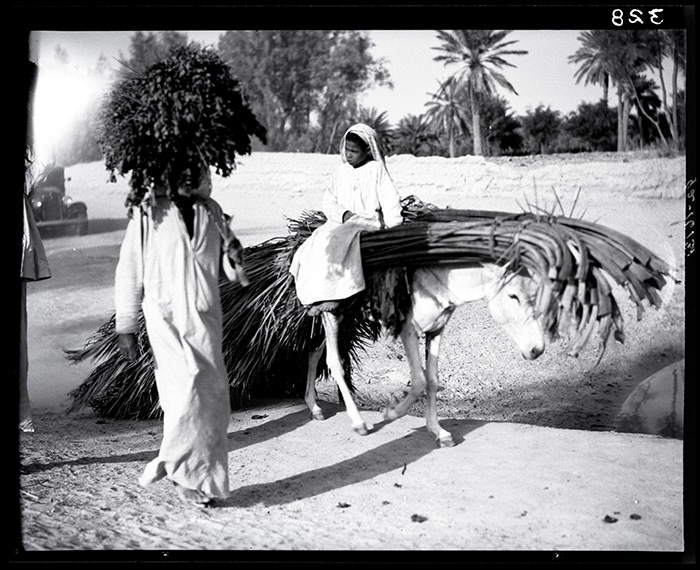 A man and child travel with a donkey loaded with date fronds in Hofuf, Saudi Arabia. Photo by Joseph D. Mountain, courtesy National Air and Space Museum